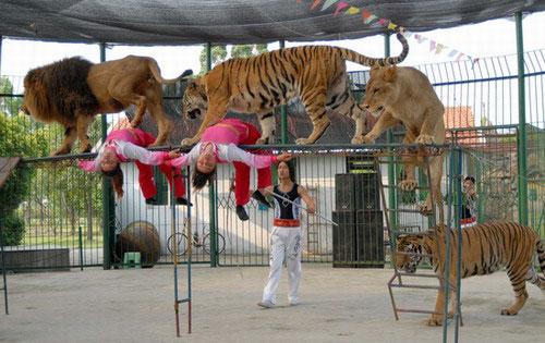 杂技节目,马戏团节目,广州活动策划公司,广州演出公司